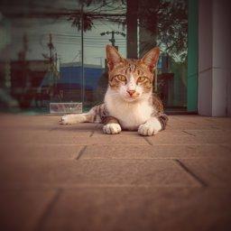 Realme5_bangna profile image