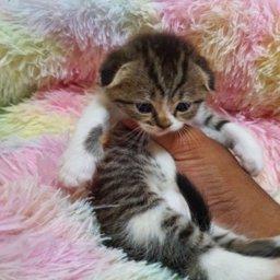 sultan1150 profile image